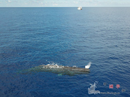 科研人员南海科考记录到11个鲸类物种_远海-航次-南海-