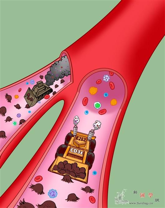 """为""""抗肿瘤战士""""T细胞蓄力赋能_磷酸化-抗原-肿瘤- ()"""