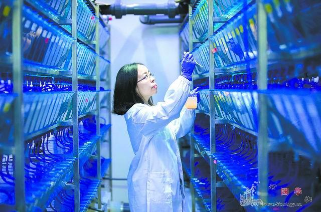 """逐""""智""""多谋_脑科学-灵长类-重点实验室-"""
