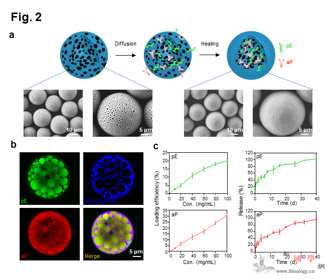 微球型白血病精准治疗性疫苗领域取得研_抗原-白血病-疫苗- ()