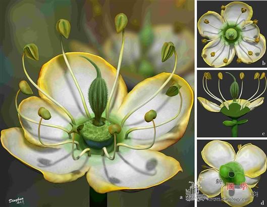 解开花朵演化之谜_抚顺-被子植物-化石-