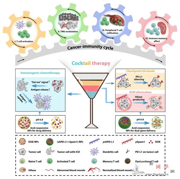 抗肿瘤免疫疗法领域取得重要进展_鸡尾酒-纳米-肿瘤-