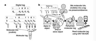 """""""豪猪""""分子标记系统可追踪微小物体_豪猪-序列-物体-"""