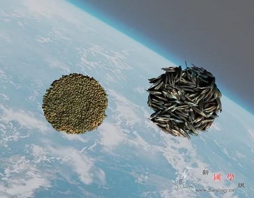 嫦娥五号搭载实验草种开展空间诱变实验_紫花苜蓿-诱变-州牧-