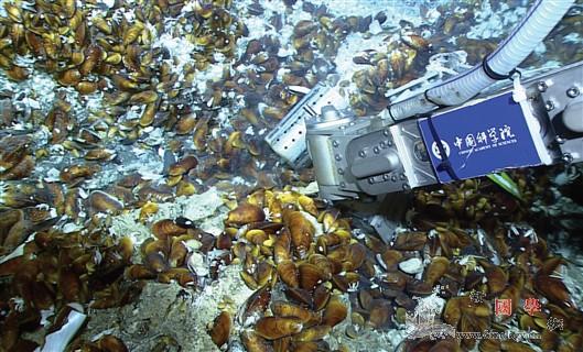 深海化能生态系统研究获进展_冷泉-宿主-共生-
