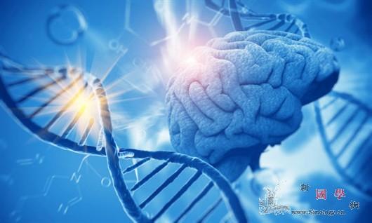 一种新方法找到让人类和猩猩不同的脑区_突变-研究人员-进化- ()