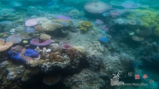 """当珊瑚礁研究遭遇""""空降兵""""_东道国-珊瑚礁-空降-"""